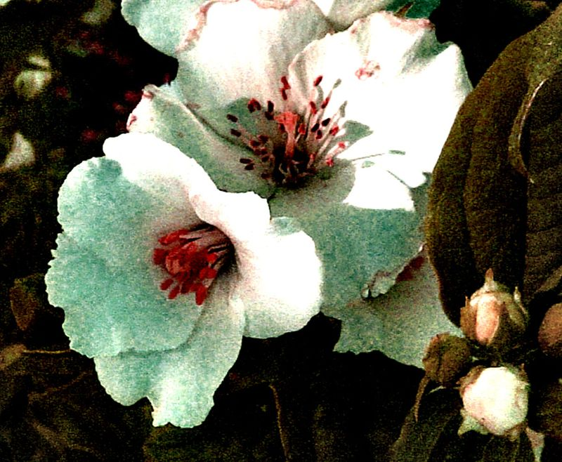 Valvo flowers-1 July 2011