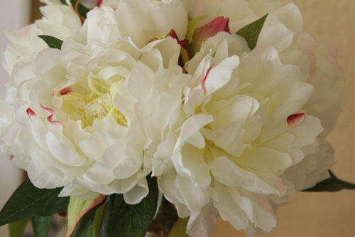 Peonie for web-4