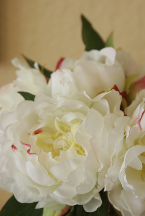 Peony for web